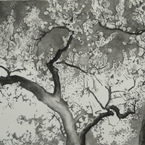 Almond Blossom, 75 x 130 cm, charcoal on paper, 2014
