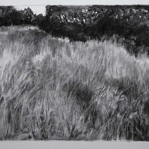Grassland # 4 (Germany), 30 x 56 cm, charcoal on paper, 2015