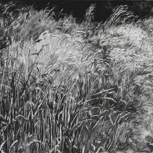 Grassland # 1, 79 x 120 cm, charcoal and conté on paper, 2014