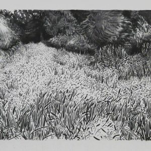 Grassland # 2, 78 x 127 cm, charcoal on paper, 2014