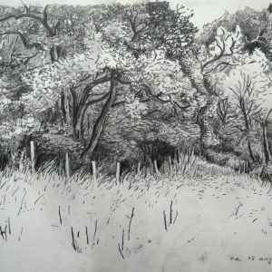 Trees, 23 x 31 cm, pencil on paper, 2015