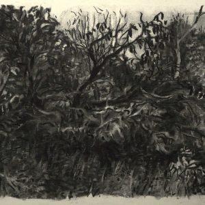 Bosjes, 32 x 48 cm, charcoal on paper, 2015